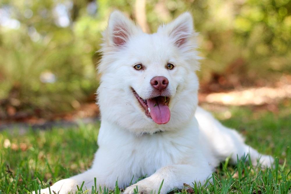 Hunderassen für Allergiker