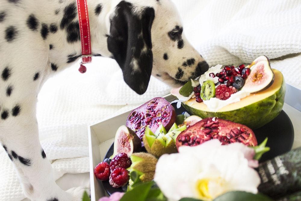 Hund isst gesund