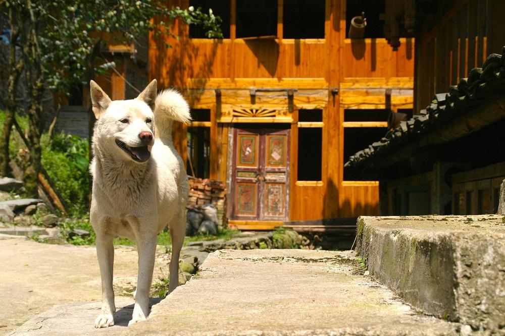 Chinesische Hunderassen